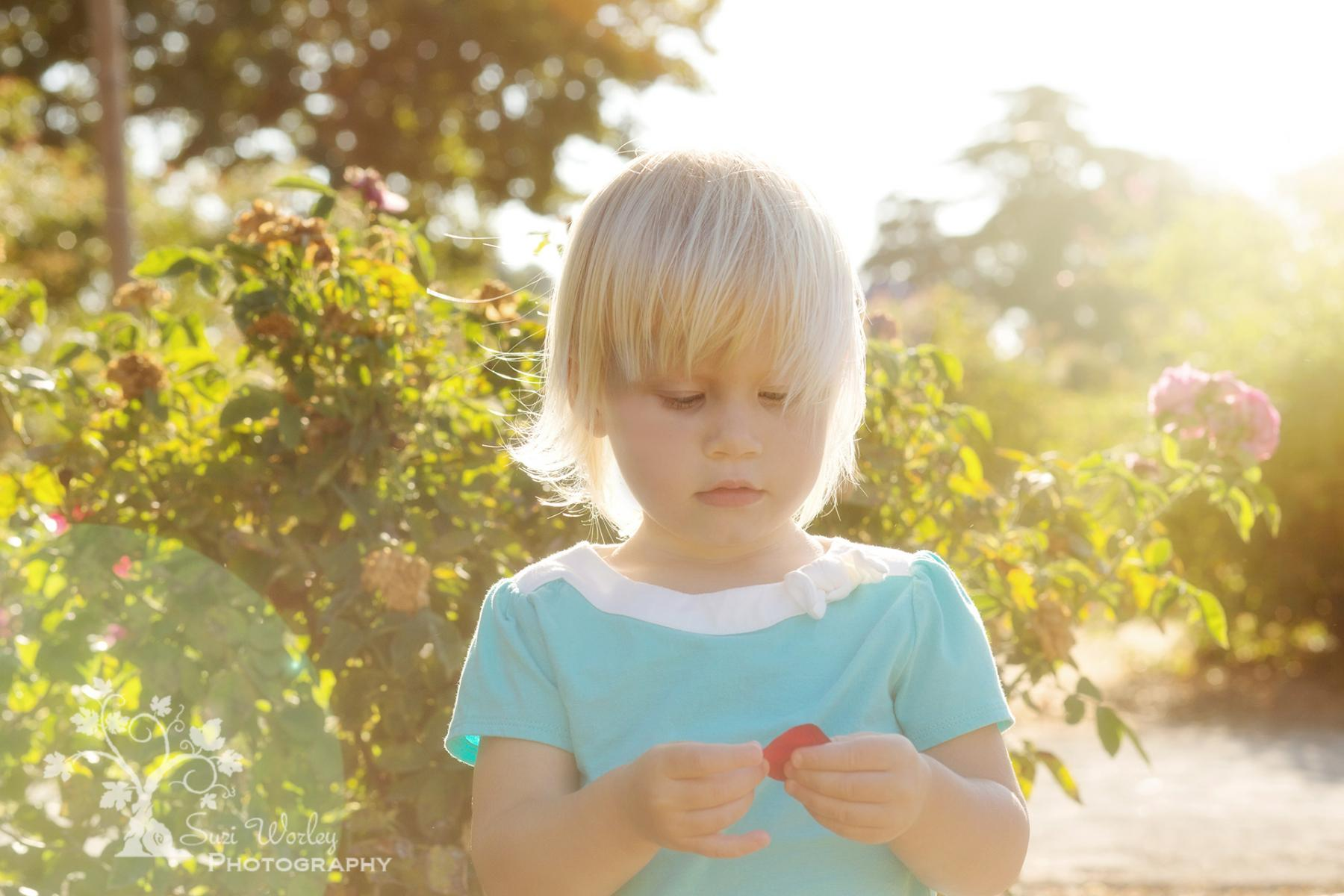 A toddler in the rose garden.  #SuziWorleyPhotography #Portraits #toddler #Daughter #flowers